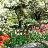 Гра кольору і світла у вашому саду: райдужні перспективи ландшафтного дизайну