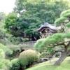 Які рослини вибрати для саду в японському стилі