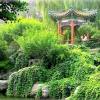 Створюємо китайський сад - відкриваємо душу світу